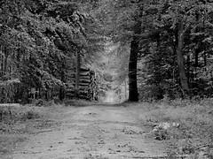 Nørreskoven (Landanna) Tags: nørreskoven als sønderjylland zuidjutland denmark denemarken danmark dänemark black bw white wit zwart zw sort hvid landscape landschap landskab