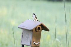 419A2827 (davekremitzki) Tags: lincoln memorial garden springfield illinois
