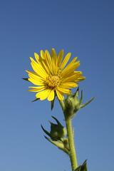 419A2726 (davekremitzki) Tags: lincoln memorial garden springfield illinois