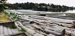 Recognizable Landmark (Bill 2.7 Million views) Tags: tags cordovabay gyropark saanich ebike bicycle note9 galaxy samsung shimano pedalec electricassist beach ocean seaside yaught boats park bioswale sand surf e6100 10mile tenmilepoint log driftwood