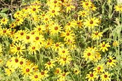 419A2823 (davekremitzki) Tags: lincoln memorial garden springfield illinois