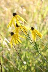 419A2809 (davekremitzki) Tags: lincoln memorial garden springfield illinois