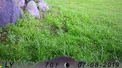 Top of the Cat (blazer8696) Tags: imag4384 brookfield connecticut unitedstates 2019 animal animalia bobcat camera carnivora carnivoran cat chordata chordate ct ecw felidae game lynx lynxrufus mammal mammalia obtusehill rufus stumptrailrock t2019 trail trap usa
