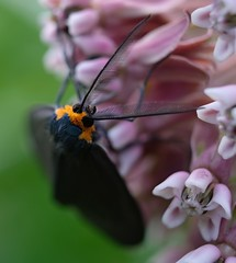 Moth (Peter_Cameron) Tags: fujixe3 fujinonxf50mmf2rwr