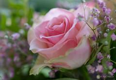 R75_8044 (53Ruth) Tags: nikond750 blumen blüten blatt garten natur