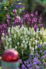 R75_8032 (53Ruth) Tags: nikond750 blumen blüten blatt garten natur