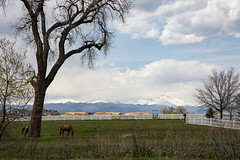 Rural Idyll (BeerAndLoathing) Tags: spring denver rp longspeak mountains horses canon canonrf24105mmf4lisusm rural picketfence outdoors colorado canoneosrp park usa may broomfield 2019