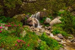 Salto de agua en Vallter 2000 (salo75) Tags: agua longexposure setcases paisaje nikon d700 rio leefilters littlestopper arboles 1635f4vr pirineus nubes catalunya vallter2000 landscape setcasas provinciadegerona españa