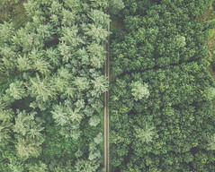 Split landscape (HenrikHansen) Tags: landscape dji mavic mavicpro drone drones nature denmark forest trees path road grass summer green
