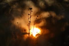 Sunset . (look to see) Tags: mood sunset zonsondergang goldenhour thasselt bree belgium ussr russianlens 250mmf35 bokeh bokehlicious jupiter36b vintagelens