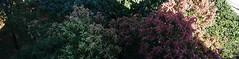 Pajeú (Alexandre Marino) Tags: pajeú pauformiga árvores flores trees flowers