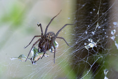 Photo of Spider & web