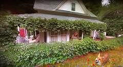 Good Days (jarr1520) Tags: nature country life house home composite textured field flowers light plants woman fox animal