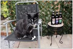 'Little Cat' (zweiblumen) Tags: cat garden shropshire canoneos50d canonspeedlite430exii polariser zweiblumen beer