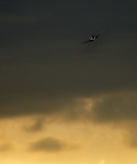 Evening Take Off (graemes83) Tags: plane airplane take off climbing evening sunset sky lights vehicle transport