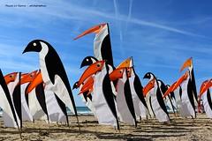 festival vent pléneuf val andré 2019 (pascal3592) Tags: festival vent pléneufvalandré pingouin cerfvolant manchot plage valandre