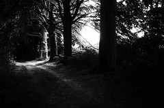 the trail (Gerrit-Jan Visser) Tags: blackandwhite bnw hike sunlight trail trees walk nature forest