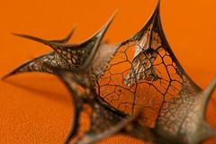 Decaying holly leaf. (daveknight1946) Tags: macromondays patternsinnature leaf hollyleaf