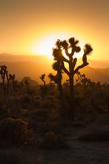 IMG_8123-1 (Hanko van Ooijen) Tags: amerika america los angeles zonsondergang joshua tree