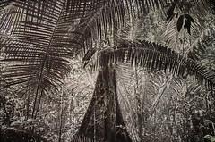 """L'exposition """"Nous les Arbres"""" à la Fondation Cartier, Paris (dalbera) Tags: dalbera paris france fondationcartier artcontemporain arbres"""