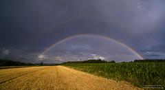 Rainbows over Hallertau (Bernhard_Thum) Tags: bernhardthum oberbayern regenbogen thum rainbow summer hallerzau holledau nikonz7 distagon2128zf distagont2821 zf zf2 nature carlzeiss
