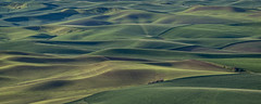 Steptoe Butte State Park (MichellePhotos2) Tags: steptoebuttestatepark steptoe butte state park palouse washington nikon d850 nikond850 hills colfax summit steptoes buttes green landscape
