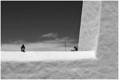 Bird On A Ledge (RadarO´Reilly) Tags: dove pigeon bw sw blackwhite schwarzweis blanconegro monochrome noiretblanc zwartwit bird