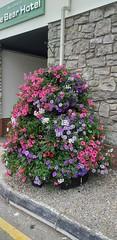Photo of Big flower pot.
