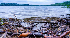 Wurzeln (KaAuenwasser) Tags: wurzeln see baum bäume ufer uferrand landschaft natur wasser gewässer kiessee pflanzen sommer 2019 wellen bewegung kies