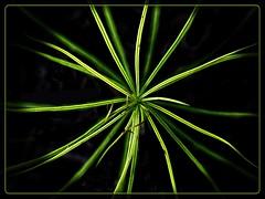 Patterns in Nature (Jack Blackstone) Tags: bokeh macro patternsinnature em1mkii macromondays green lowkey flora border on1edit