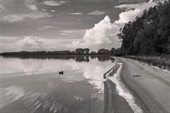 lake (bożenabożena) Tags: landscape bw landscapebw monochrome sky clouds trees reflectione krajobraz krajobrazbw niebo chmury jezioro poland lake