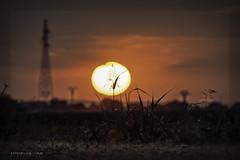 ☀️ Summer in red key. El Salobral-Albacete (ES) Julio 14 de 2019. (EFRAIN A. JACOME Q.) Tags: sun summer red sunset nature landscape light efraín albacete españa
