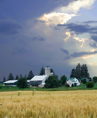 storm at the farm.jpg (Wellstood) Tags: farm wheat storm clouds field nikon d7100 sky waterloo ontario canada