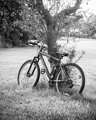At Rest (lclower19) Tags: bike bicycle tree parked black white bw relax