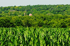 Barn over the hills & .7 miles away - Big Bend, Wisconsin (Cragin Spring) Tags: wisconsin wi midwest rural unitedstates usa unitedstatesofamerica green corn barn hill bigbendwi bigbend bigbendwisconsin redbarn