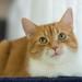 (alex_virt) Tags: cat catography mitch samsung samsungnx30 helios44258mmf2
