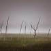 Stuck (Bert CR) Tags: nature mood moody misty swamp slidersunday sliders edit processing