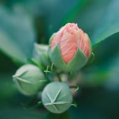 Ready to Bloom! (vui.la9) Tags: