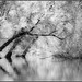 kayaking Crockery Creek (Max Gerber Smith) Tags: crockerycreek ottawacountyparks