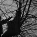 El árbol/ The tree (Alle_Moris) Tags: