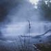 (cara zimmerman) Tags: cataractfalls fog waterfall plants