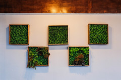 Symmetrical plant frames hanged on white wall (wuestenigel) Tags: woodenframe stockphotography frames restaurant digitalnomad outdoor design architecture interior foodpark photography pot reiseblogger stockphoto bricks plants display wallart decoration woodwall noperson keineperson pictureframe bilderrahmen room zimmer nature natur empty leeren diearchitektur house haus stilllife stillleben indoors drinnen art kunst wood holz tree baum museum window fenster family familie flower blume grass gras wall wand leaf blatt landscape landschaft 2019 2020 2021 2022 2023 2024 2025 2026 2027 2028 2029 2030