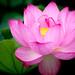 D50_8059.jpg (piyopiyo4649) Tags: happyplanet asiafavorites
