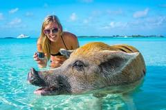 Khám phá Bahamas - quần đảo với những chú lợn biết bơi (quynhchi19102016) Tags: ve may bay gia re di bahamas
