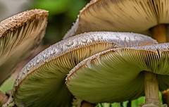 Patterns in Nature (Explore 7-15-2019) (Mi Bob) Tags: mushrooms toscanaisles patternsinnature macromonday