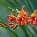 Tropical (twcrowe50) Tags:
