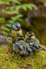 (katrinlillenthal) Tags: nature beautyinnature birds
