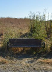 Park Bench in the Weeds (JustinPhiIIips) Tags: walk weekend summer park berkeley california west coast outdoors nikon d3200 nature vertical clear bluesky bench weeds brush grass trailside unedited asshot 35mm