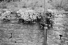 danger de mort (vladixp) Tags: fp4 fp4plus fp480 d76 14min 20c 12 praktica mtl5 flektogon k2 pf7250u 3600dpi 35mm yellowfilter filmscan 35mmfilm film bw bwfilm filmphotography negative scanned svizzera schweiz switzerland suisse broc cailler fribourg dangerdemort