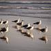 La Serena | Coquimbo (chamorojas) Tags: albertorojas regióndecoquimbo chamorojas gaviotas seagulls birds sea mar laserena chile